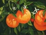 1433 Blooming oranges