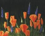 1434 poppies XXXIV