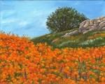 1510 Poppy field