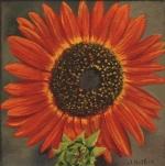 1519 Orange sunflower.jpg