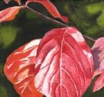 1550 Turning Leaf XVII