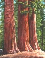 1560 Three Sequoias