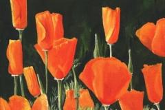 1606 Poppies #42
