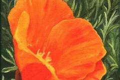1607 Poppy #43