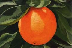 1608 Oranges 126
