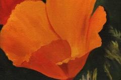 1609 Poppy #44