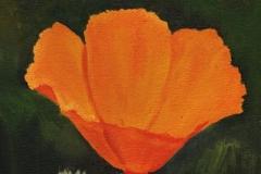 1610 Poppy #45