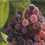 Grapes IV.jpg