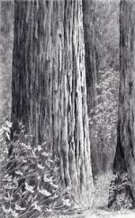 redwood&dogwood