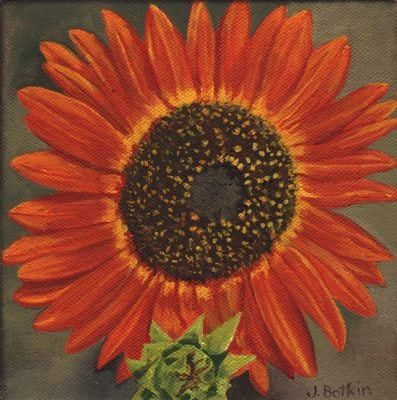 1519 Orange sunflower