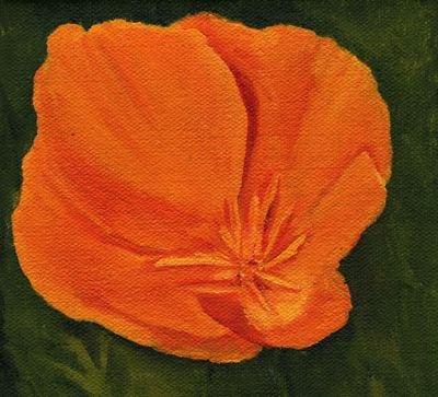 1611 poppy 46