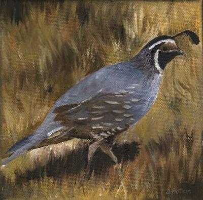 1622 Calif quail #2