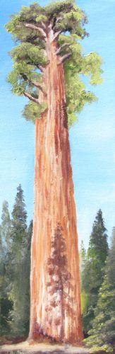 6x18 oil painting of sequoia tree