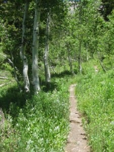 Through the aspen trees on the Nature Trail