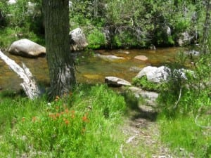 The Nature Trail goes close to the east fork of the Kaweah River, with Indian Paintbrush in abundance.