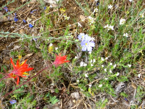 wildflowers on Empire, Mineral King, photo by Jana Botkin