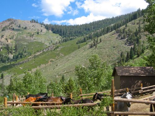 horses and mules below Timber Gap photo by Jana Botkin