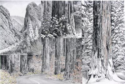 Sequoia 4 seasons