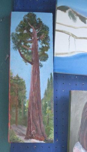 Sequoia painting